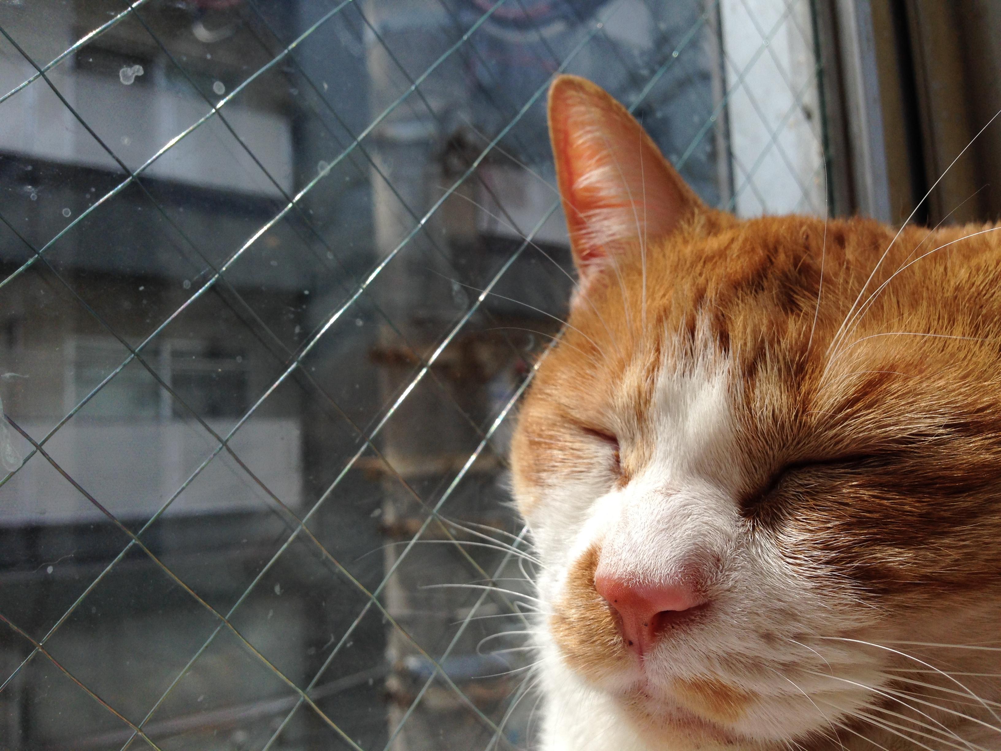 猫と網入りガラス